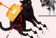 黄油猫悖论:一只旋转不停的喵,根本停不起来-颜夕夕萌物馆_儿童早教一站就够了