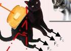 黄油猫悖论:一只旋转不停的喵,根本停不起来